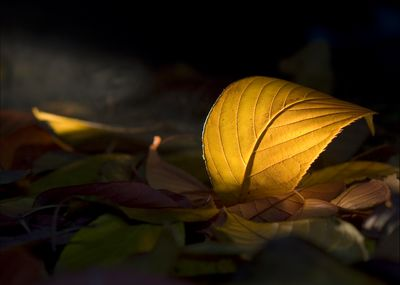 Photo Didier VIDAL : Feuilles Mortes
